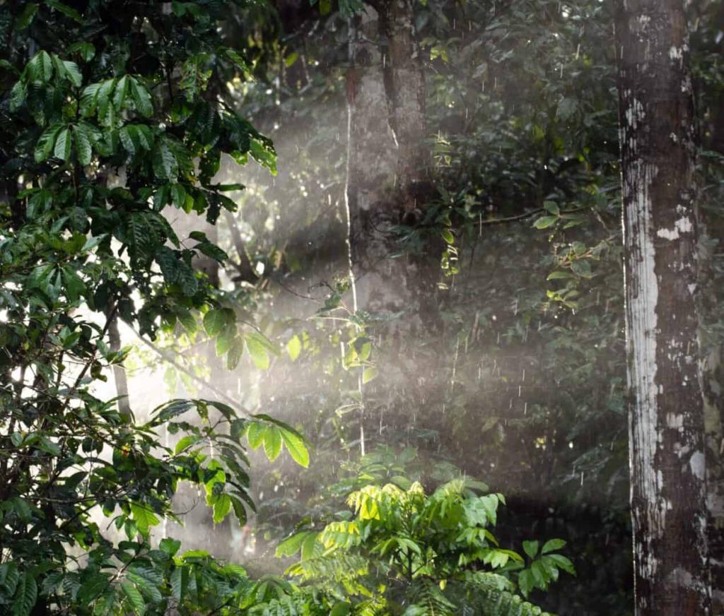 Querida Amazonia scaled